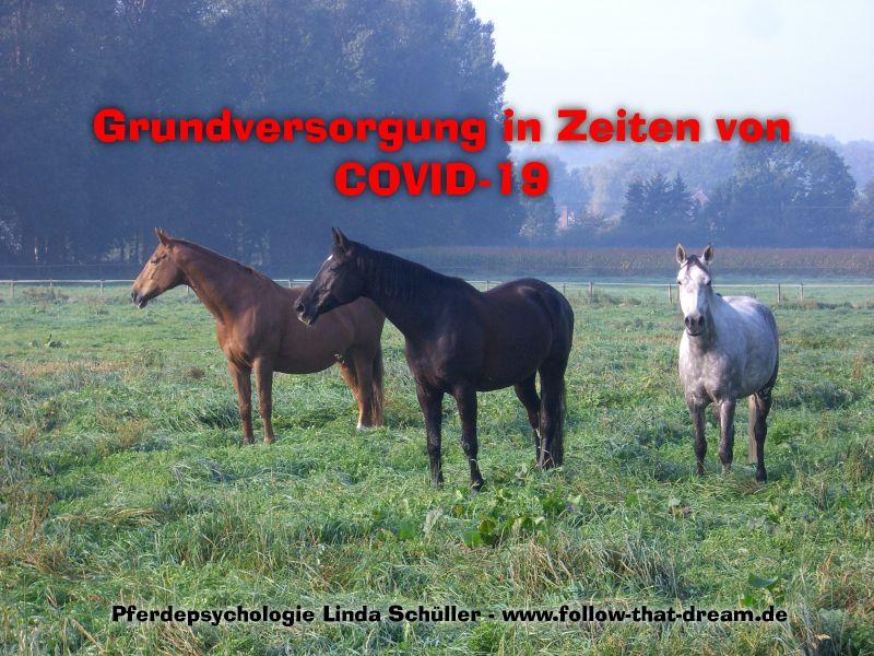Grundversorgung der Pferde in Zeiten von COVID-19