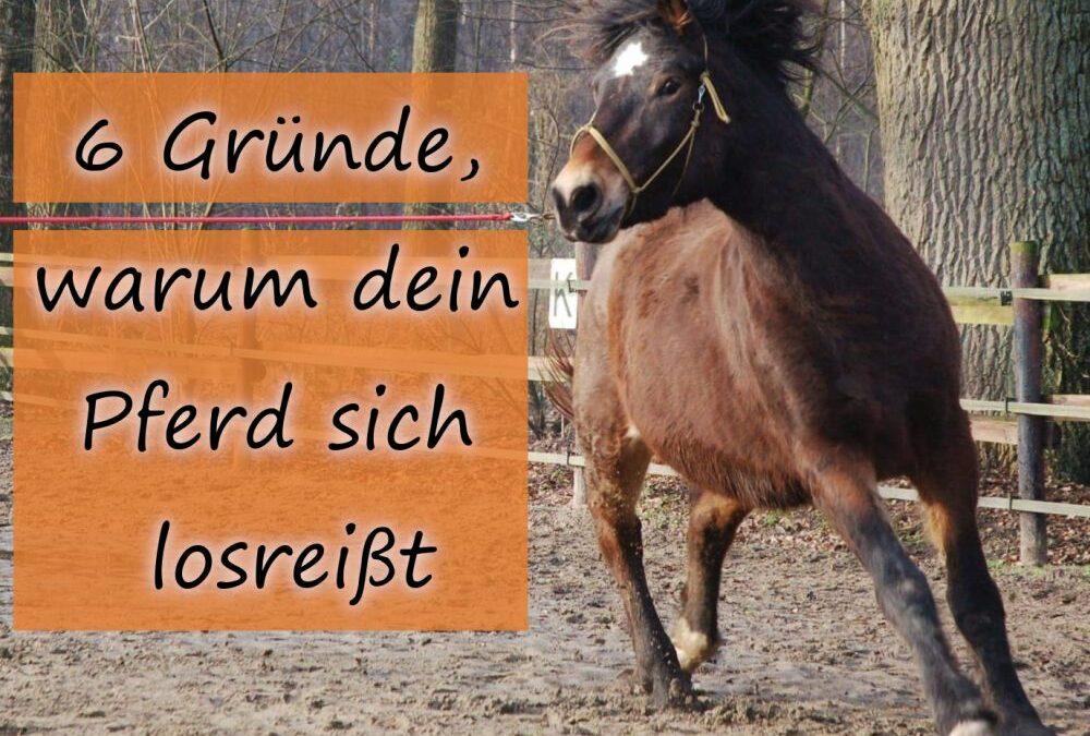6 Gründe, warum dein Pferd sich losreißt
